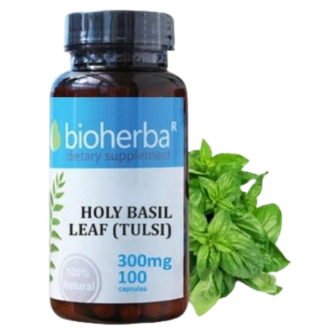 СВЕЩЕН БОСИЛЕК ЛИСТ (ТУЛСИ) 300мг 100 капс. БИОХЕРБА | HOLY BASIL LEAF (TULSI) 300mg 100 caps. BIOHERBA